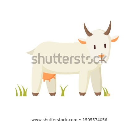 Nanny Goat Standing on Grass Cartoon Character Stock photo © robuart