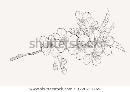 Foto stock: Pattern Of Cherry And Apple Tree Blossom And Branch Sketch