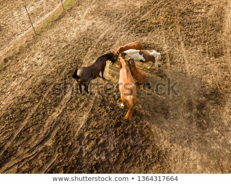 farmland with a small group of horses grazing on a summer day aerial view from the drone stock photo © artjazz