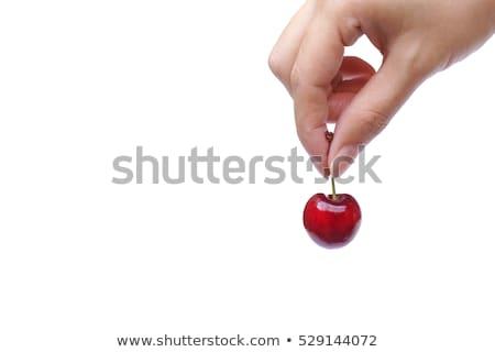 hands holding cherries stock photo © alex9500