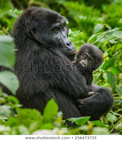 A gorilla in the island Stock photo © colematt