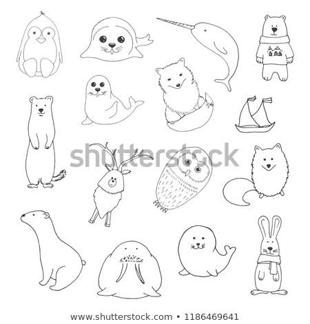 Sketch various northern animals. Large set. Vector illustration  Stock photo © Arkadivna