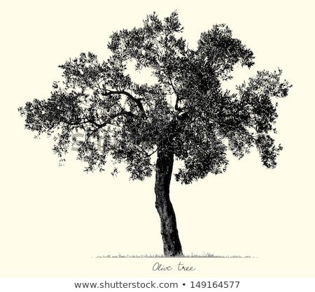 Agricultural Olive Tree Branch Vintage Vector Stock photo © pikepicture