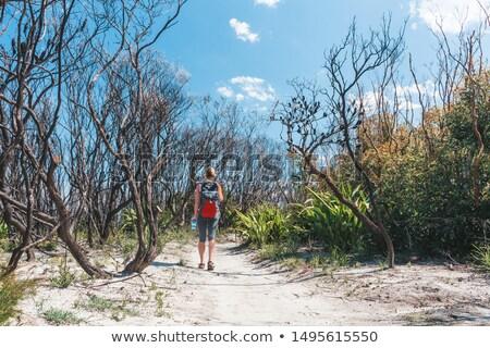 Randonnée sable sentier ensoleillée chaud Photo stock © lovleah