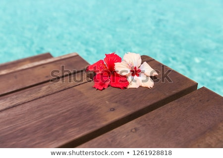 Gyönyörű lila hibiszkusz virág fából készült móló Stock fotó © dolgachov