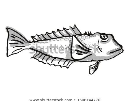 Kék Új-Zéland hal rajz retro rajz Stock fotó © patrimonio