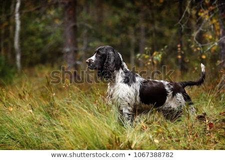 Zielone lasu drzew odizolowany Zdjęcia stock © robuart