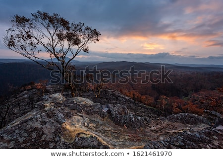 Burnt and charred bush land in Australia after bush fires Stock photo © lovleah
