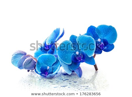 Reflection of flowers in blue water Stock photo © boroda