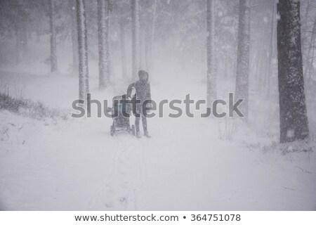 pinho · árvores · neve · nevasca · montanhas · árvore - foto stock © sirylok