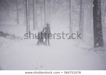 Dicht sneeuwstorm pijnboom bos natuur winter Stockfoto © sirylok