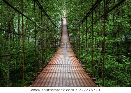 Tropische hangbrug rivier Costa Rica ondersteuning hoofd- Stockfoto © searagen