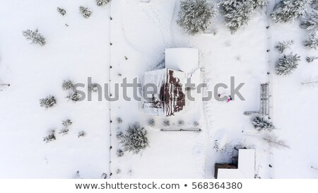 Sosny lasu śniegu drewna charakter Zdjęcia stock © akarelias