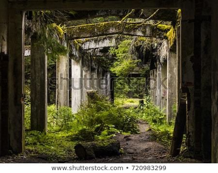 古い · 捨てられた · 建物 · インテリア · 建設 · 壁 - ストックフォト © pictureguy