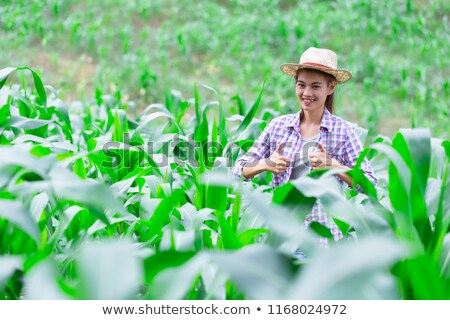 Beautiful young woman in a sweetcorn field Stock photo © photography33