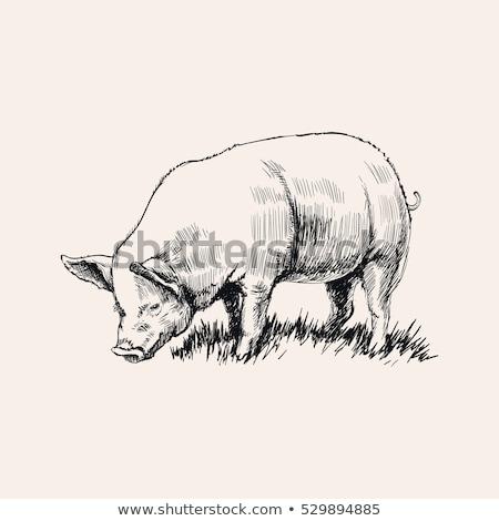 Porco mão caneta fundo Foto stock © jeremywhat