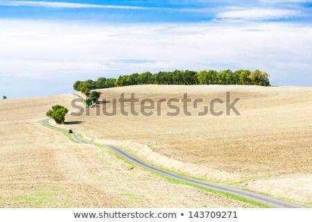 campo · strada · dipartimento · Francia · panorama · impianto - foto d'archivio © phbcz