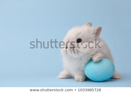 Easter funny bunnies with eggs stock photo © anmalkov