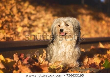 собака зеленая трава лице зеленый собаки белый Сток-фото © c-foto