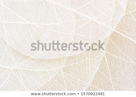 ölü kahverengi yaprak damarlar makro doku Stok fotoğraf © njnightsky