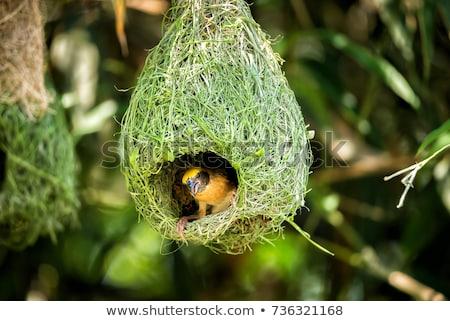 鳥の巣 支店 ツリー 青空 家 ストックフォト © stoonn