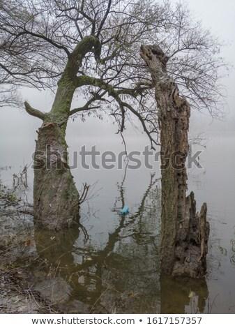 Dwa butelek jesienią krajobraz mgły rano Zdjęcia stock © CaptureLight