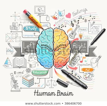 creative pen and pencil in human head creative mind concept stock photo © vgarts
