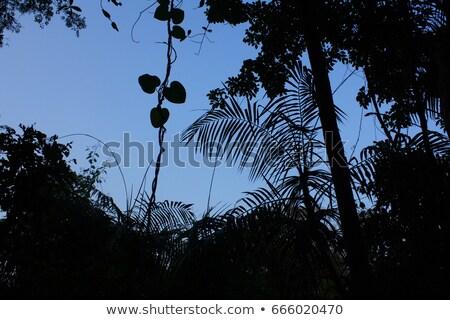 Misterioso India goa legno natura panorama Foto d'archivio © mcherevan