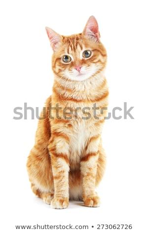 Arancione bianco colore cat seduta terra Foto d'archivio © GeniusKp
