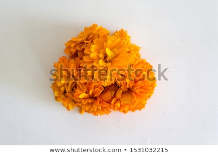 Yellow Marigold - Cempasuchil Flower stock photo © Camel2000