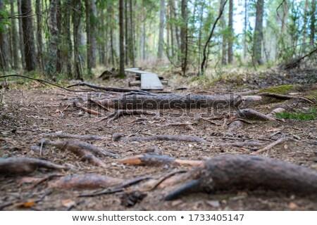 Bog Landscape in Allg Stock photo © dirkr