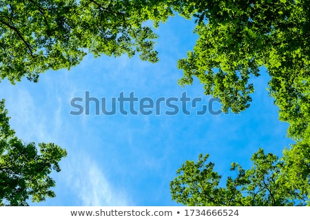 tree and blue sky Stock photo © almir1968