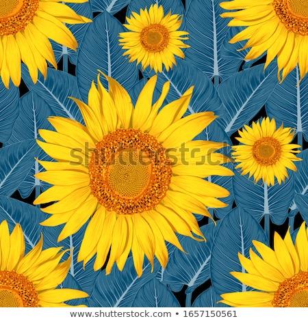 vettore · girasole · modello · di · fiore · sementi · testa · fiore - foto d'archivio © freesoulproduction