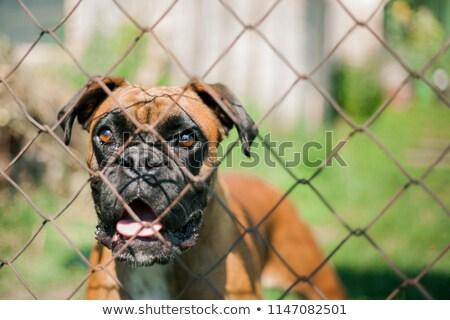 Boxoló mögött vasaló kerítés crossfit tornaterem Stock fotó © wavebreak_media