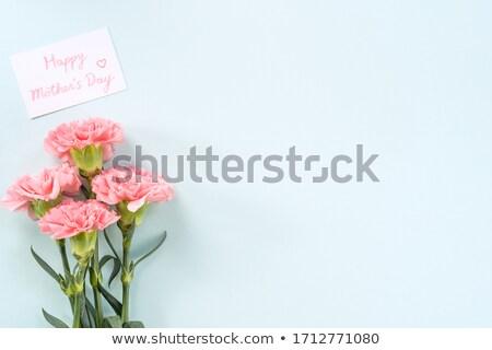Vacío azul plantilla clavel rosa flores Foto stock © bluering
