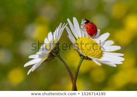 Katicabogár zöld levél természetes fű természet nyár Stock fotó © simply