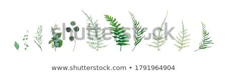 Delicate organic white asparagus Stock photo © Klinker