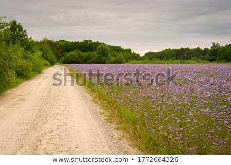 Veld bloemen zomer namiddag hemel Stockfoto © hraska