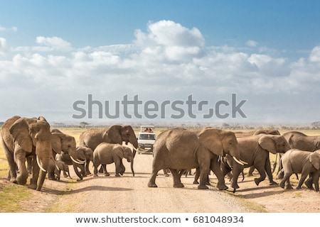 Family of elephants on dirt roadi in Amboseli Stock photo © kasto
