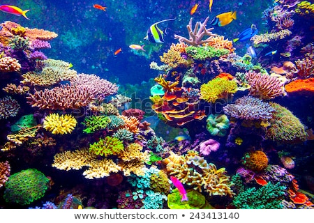 Diver diving underwater with many sea animals Stock photo © bluering