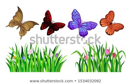 Vetor conjunto belo floral projeto elementos Foto stock © lissantee