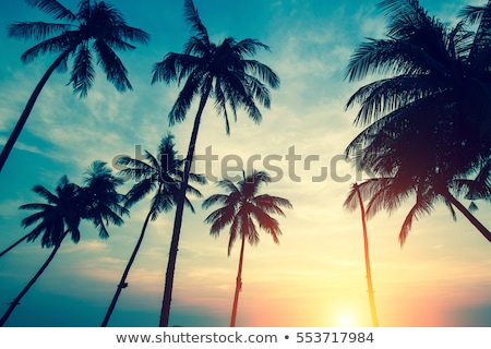 silhouettes of palm trees against the sea sunset stock photo © pavlovski