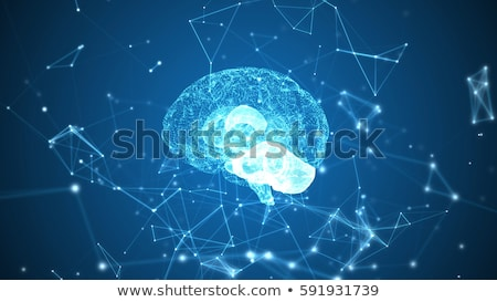 Human brain, anatomy structure. Human brain anatomy 3d illustration. Stock photo © tussik