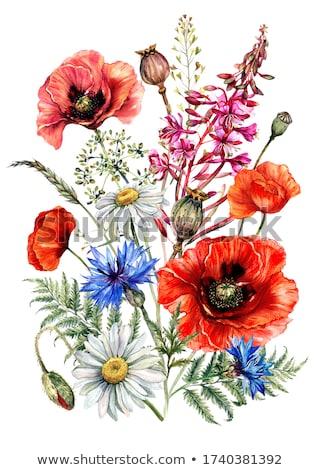 мак василек лет области цветы Blue Sky Сток-фото © neirfy
