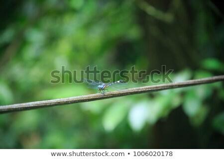 Draak vergadering touw regenwoud bos achtergrond Stockfoto © Juhku