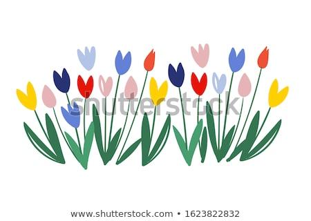 virágcsokor · piros · tulipánok · izolált · ikon · köteg - stock fotó © studioworkstock