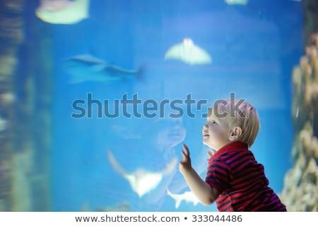 Garçon requin aquarium nature enfant amusement Photo stock © IS2