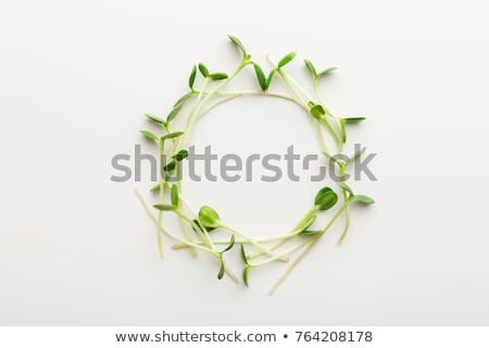 Vegetable salad with freshly grown microgreens, top view Stock photo © madeleine_steinbach