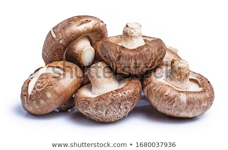 Shitake Mushroom on White Background Stock photo © joannawnuk