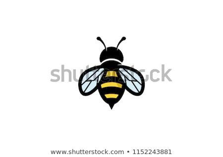 cute · bee · schets · illustratie · icon · plant - stockfoto © Blue_daemon